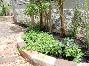 花壇に植えたハーブ類の写真