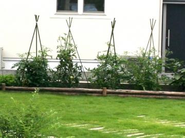 横に長い菜園の写真