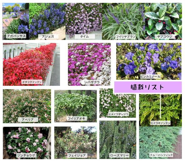 ~植栽~の写真
