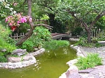生き物の息吹を感じるお庭の写真
