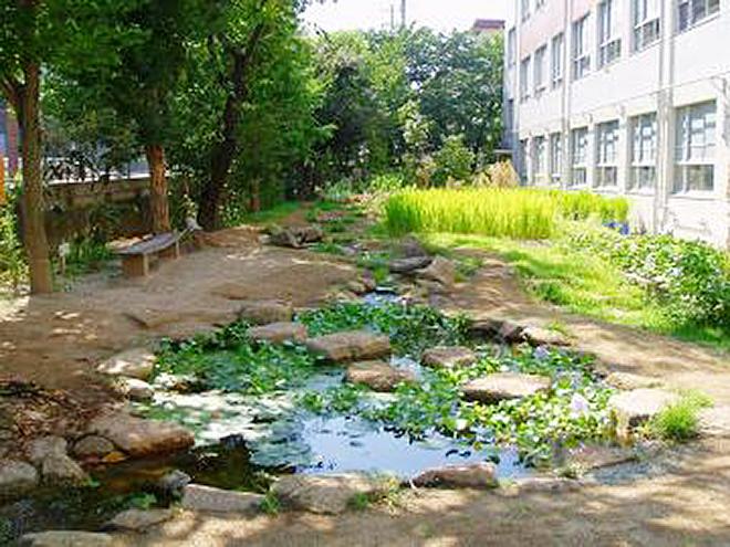 名古屋市内公立小学校 自然の豊かさを学びます の写真