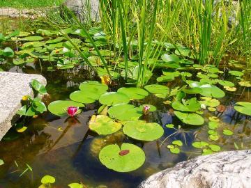 生態系が学べる池の写真