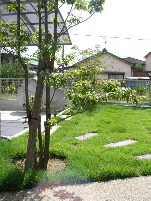 夏場の照り返しを防ぐ芝生の写真