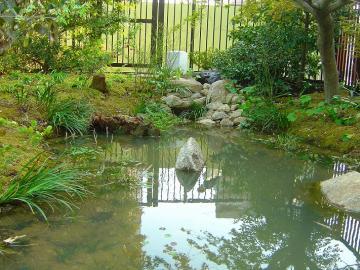 夏の暑さを和らげる池の写真