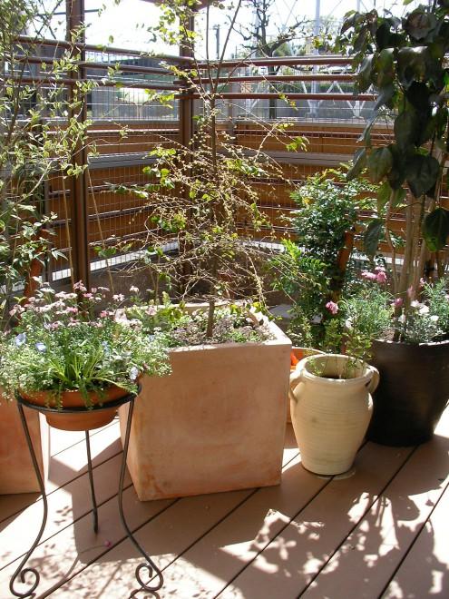 鉢と植物のバランスを楽しむの写真